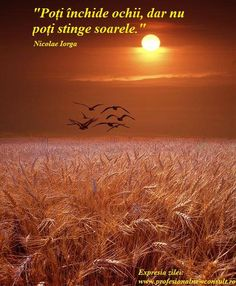 Seagulls fly over a golden wheat field at sunset in Michigan bird landscape color Fine Art Landscape Photography - Gulls flying over a Wheat Field at Sunset in Michigan – A Bird Landscape Photograph - Beautiful Sunset, Beautiful World, Beautiful Places, Beautiful Pictures, Poem Beautiful, Beautiful Scenery, Beautiful Birds, Fields Of Gold, Landscape Photography