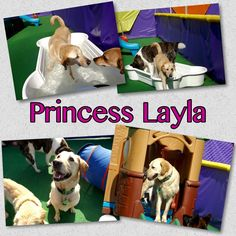 Lola now Layla is enjoying her new home.  Happy Tails sweet girl!