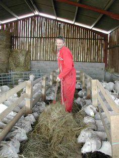 Olivier donne du foin aux chèvres Angora - @ Bergers Cathares