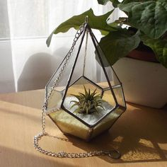 Stained Glass Air Plant Terrarium Stained by RavensStainedGlass, £45.00