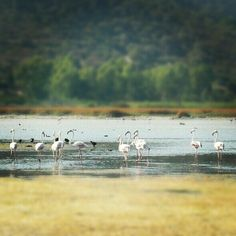 Fenicotteri rosa Bird, Animals, Animales, Animaux, Birds, Animal, Birdwatching, Animais
