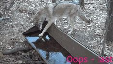 Oops – contemporary #Lololol, #HaHa, #HumorInspiration, #JokesHilarious   #BeingHomeAloneHumor, #DumbassHumor, #HumorousHilarious, #SarcasticHumor, #SillyHumor Water Trough, Frozen Water, Drinking Water, Funny Jokes, Wtf Funny, Freeze, Brain, Pictures, Crazy Video