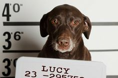 """Lucy the dog denied cake; sets the kitchen on fire.   Just this February, Lucy nearly burned down her owner's Jacksonville, Okla., house when she tried to eat a cake sitting on the stove. Lucy's """"big paws"""" turned on the gas burner, setting the kitchen on fire."""