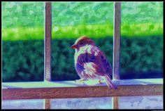 sparrow  by Giancarlo Gallo