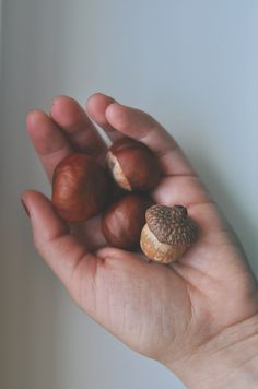 nature, photograpgy, autumn, hand