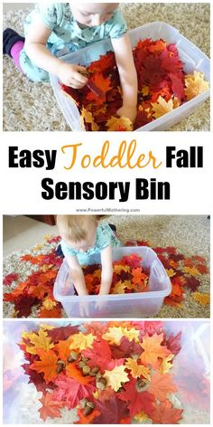 Easy Toddler Fall Sensory Bin Idea SENSORY: This could be fun to include other objects related to fall and teach them about this season. Fall Activities For Toddlers, Lesson Plans For Toddlers, Fall Preschool, Autumn Activities, Toddler Sensory Activities, Fall Art For Toddlers, Work Activities, Activity Ideas, Toddler Preschool
