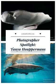In this series of articles, we'll shine a spotlight on some of the world's best underwater photographers. Today we highlight Tanya Houppermans.