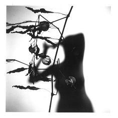 (13/55) Harry Callahan - photographer - photographs etc.