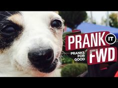 ABUSED DOGS GET SURPRISE OF A LIFETIME - Prank It FWD - MUST LOVE DOGS - YouTube. I cried so much it is so sad but happy!