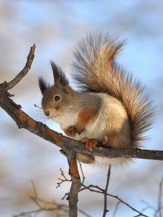 Pretty Photo of a Squirrel