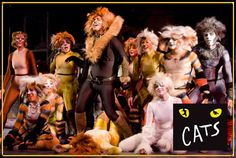 went while on Broadway, sat in 3rd row, cats made their way through the crowd, best experience ever at a theater event.  Ever.