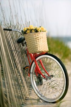 SuperStock - Red vintage bicycle with basket and flowers leaning against wooden fence at beach.