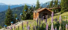 Can this be my office? Bike Events, Bike Quotes, Bike Parking, Trail Maps, Cabin, Outdoor, Mountains, House Styles, Summer