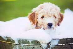 7 Common Bath-Time Mistakes Pet Owners Make | petMD