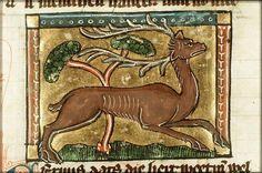 medieval illustrations animals - Google zoeken