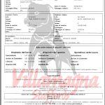 Staffordshire bull terrier - Villamagna Staffords