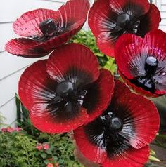 BUNCH OF 5 TALL POPPIES ~ By Wayne Morrison ~