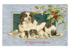 vintage english springer spaniels | Vintage springer spaniel Christmas postcard. Love it. Mother and ...