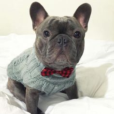 Meet Meatloaf, a Gentleman of a French Bulldog, @meatloafthefrenchie