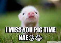 Social Media Posting Schedule, Baby Pigs, Mom Daughter, Sad, Memes, Cute, People, Animals, Piglets
