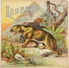 Leopard Tobacco