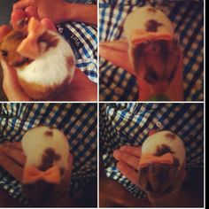 Hamster headband