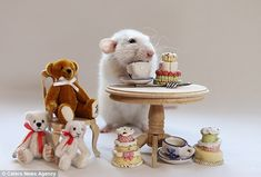 Adorable: This rat settles down with some cuddly friends for afternoon tea and cake, in one of a series of cute photographs taken by Dutch photographer Ellen Van Deelen