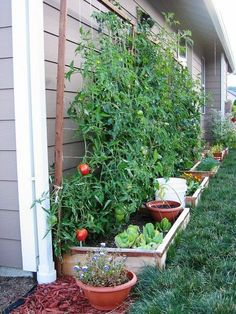 Beete in Hausnähe für Tomate