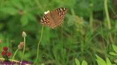 Butterflies in Bangkok