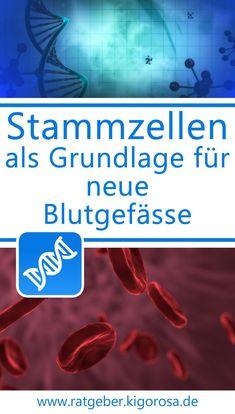 Stammzellen als Grundlage für neue Blutgefässe (Aterien, Venen, Kapillaren) Diabetes, Baby, Adipose Tissue, Wound Healing, Regenerative Medicine, Trying To Conceive, Baby Humor, Infant, Babies