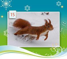Und hepp! Dieses niedliche Eichhörnchen sprang Margret Brackhan vor die Linse und in unseren Adventskalender.  Margret Brackhan: Mit dem Eichhörnchen durchs Jahr: http://www.calvendo.de/galerie/mit-dem-eichhoernchen-durchs-jahr-2