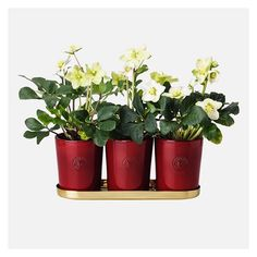 Erika Pekkari designed these clay pots exclusively for Svenskt Tenn. The pots are handmade in Västergötland, Sweden. The beautiful, red, Christmas variant is available in three different sizes. Link in bio. #svenskttenn #christmas #jul