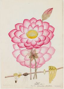 William Roxburgh Botanical