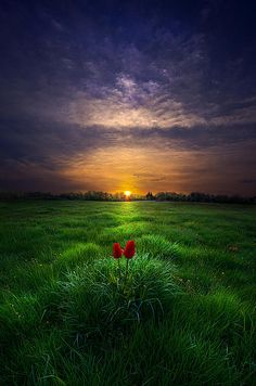 You and I by Phil Koch on Capture Wisconsin // A lone pair of tulips watch the sunrise over Wisconsin. Beautiful Sunset, Beautiful World, Beautiful Images, Beautiful Scenery, Simply Beautiful, Amazing Photography, Landscape Photography, Nature Photography, Foto Picture