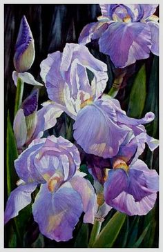Iris: watercolor painting from Marihet Ferreira Viviers. Iris Painting, Watercolour Painting, Watercolor Flowers, Watercolors, Art Floral, Iris Art, Art Aquarelle, Watercolor Pictures, Iris Flowers