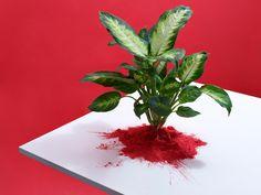 Powder Paint Plants   Victoria Ling