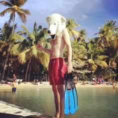 Snorkeling time ! #pauliebeer #gwada #lessaintes #guadeloupe #snorkeling