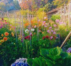 Des Fleurs Pour Algernon, Children Of The Revolution, Pastel Sunset, Strawberry Fields Forever, Sustainable Farming, Gladiolus, Retro Futurism, Farm Life, The Great Outdoors