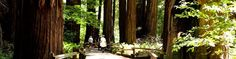 """Muir Woods is known as """"the best tree-lovers monument that could possibly be found in all the forests of the world.""""  #WeekendGetaways #MuirWoods"""