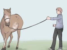 Teach Your Horse to Lunge