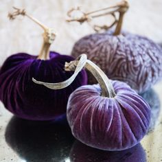 Purple Rain - Velvet Pumpkins