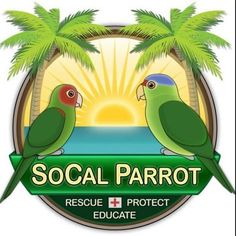 SoCal Parrot is a 501c3 nonprofit organization that rescues, rehabilitates, and cares for southern California's wild parrot flocks.  We are building a new outdoor aviary to house wild parrots in recovery, and need your help to complete it! The struct