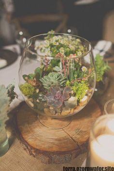 brand-new summer Succulent Terrarium Centerpiece see - Terrariums Terrarium Wedding Centerpiece, Mirror Centerpiece, Non Floral Centerpieces, Rustic Wedding Centerpieces, Wedding Tables, Rustic Wedding Seating, Succulent Terrarium, Terrariums, Geometric Wedding