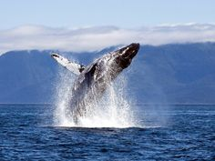 Humpback Whale Photo – National Geographic ...