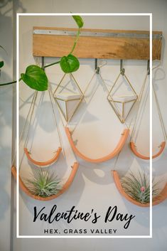 Looking for a living plant for your Valentine's Day gift? Check out HEX in downtown Grass Valley for all your botanical needs. Crazy Horse Saloon, Chocolate Shoppe, Clay Classes, City Winery, Grass Valley, Creative Class, Air Plant Terrarium, Nevada City, Gift Certificates