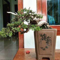 "110 Likes, 1 Comments - Bonsai Mini (@bonsai_ind) on Instagram: ""jual bonsai . . . #bonsai"""