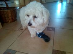 Gde je moje ponožka? Aha  má ji Leila