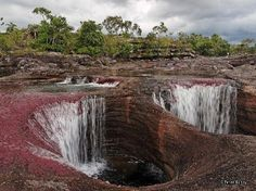 Caño Cristales is a river located in the Serrania de la Macarena province of Meta, Colombia. The Wave Arizona, Places To Travel, Places To See, Columbia, South Of The Border, Future Travel, Amazing Nature, Trip Advisor, National Parks