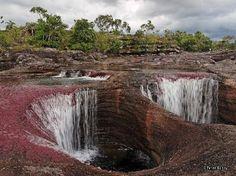 река Cano Cristales, НП Макарена, Колумбия