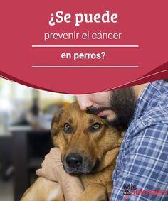 ¿Se puede prevenir el cáncer en perros? Vamos a descubrir en este artículo si se puede prevenir el cáncer en perros y en caso de ser así, cómo lograrlo para que no sufra la enfermedad. #cáncer #prevenir #alimentación #enfermedad